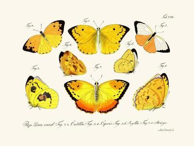 https://imgc.artprintimages.com/img/print/butterflies-1783-1806_u-l-pvqfdn0.jpg?p=0