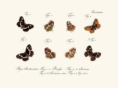 https://imgc.artprintimages.com/img/print/butterflies-1783-1806_u-l-pvqfgk0.jpg?p=0