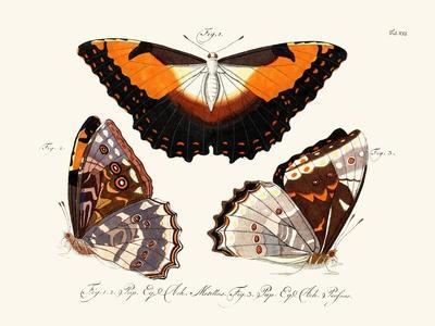 https://imgc.artprintimages.com/img/print/butterflies-1783-1806_u-l-pvqkeh0.jpg?p=0