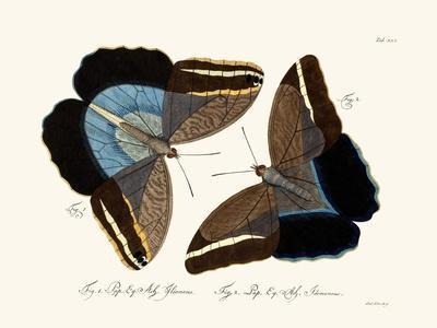 https://imgc.artprintimages.com/img/print/butterflies-1783-1806_u-l-pvqlft0.jpg?p=0