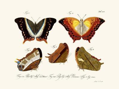 https://imgc.artprintimages.com/img/print/butterflies-1783-1806_u-l-pvqokz0.jpg?p=0