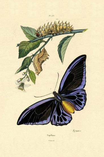 Butterflies, 1833-39--Giclee Print