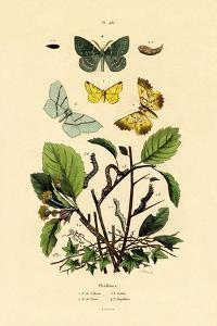 Butterflies, 1833-39