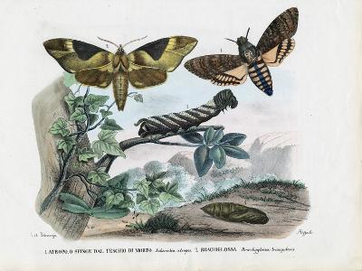 Butterflies, 1863-79-Raimundo Petraroja-Giclee Print