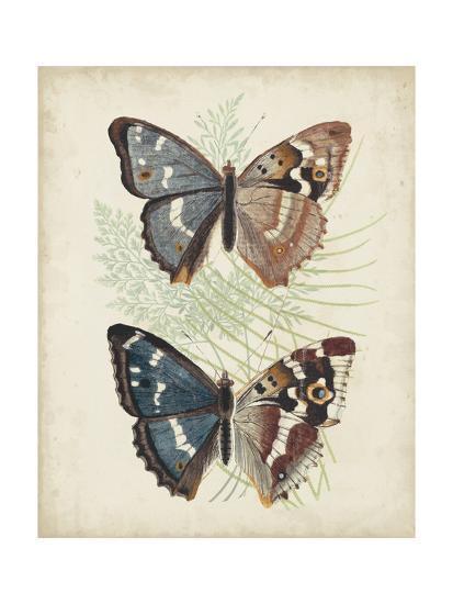 Butterflies and Ferns IV-Vision Studio-Art Print