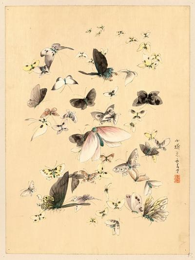 Butterflies and Moths, Between 1800 and 1850--Giclee Print