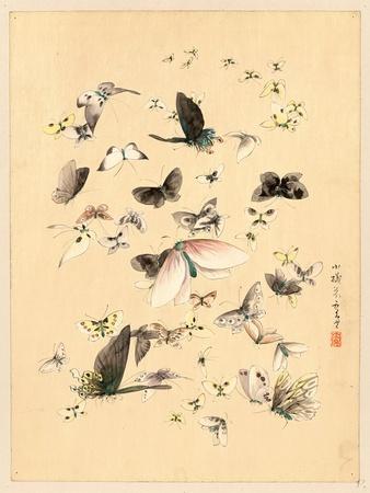 https://imgc.artprintimages.com/img/print/butterflies-and-moths-between-1800-and-1850_u-l-pvthmn0.jpg?p=0