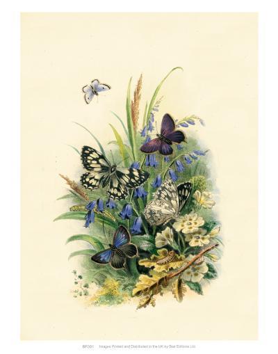 Butterflies and Moths, no.1--Art Print