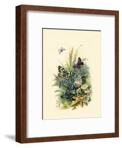 Butterflies and Moths, no.1