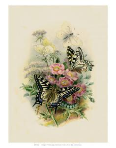 Butterflies and Moths, no. 2