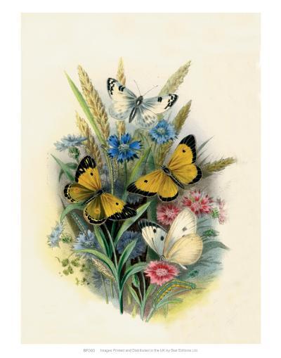 Butterflies and Moths, no. 3--Art Print