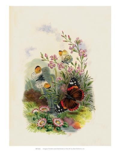 Butterflies and Moths, no. 4--Art Print