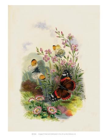 Butterflies and Moths, no. 4