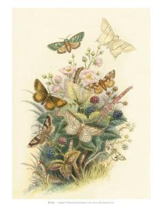 Butterflies and Moths, no. 6