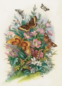 Butterflies and Moths, no. 7