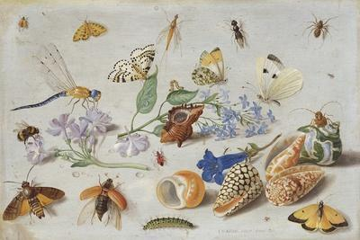 https://imgc.artprintimages.com/img/print/butterflies-and-other-insects-1661_u-l-pprpu60.jpg?p=0
