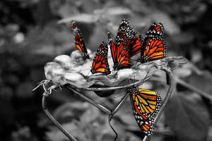 Butterflies at the Bronx Zoo NYC Poster