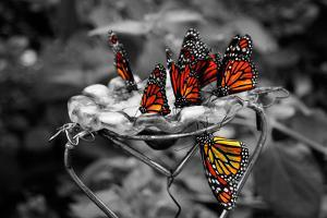 Butterflies at the Bronx Zoo NYC