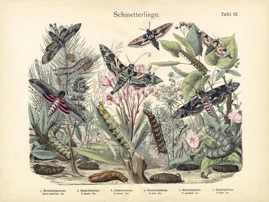 Butterflies, C.1860--Giclee Print
