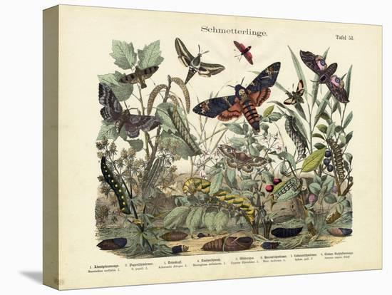 Butterflies, C.1860--Stretched Canvas Print