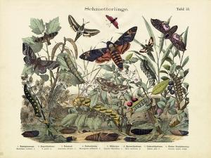 Butterflies, C.1860