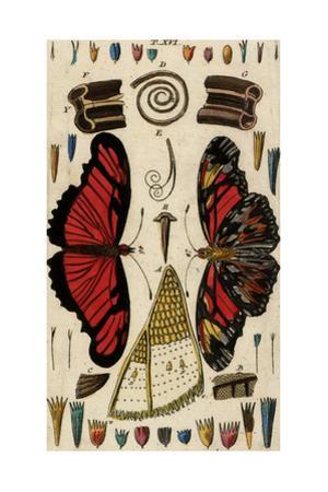 Butterflies, Caterpillars, and their Body Parts