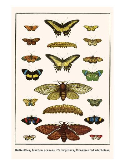 Butterflies, Garden Acraeas, Caterpillars, Ornamented Utetheisas,-Albertus Seba-Art Print