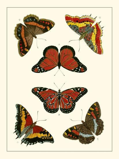 Butterflies I-Pieter Cramer-Art Print