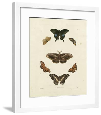 Butterflies III-George Wolfgang Knorr-Framed Art Print