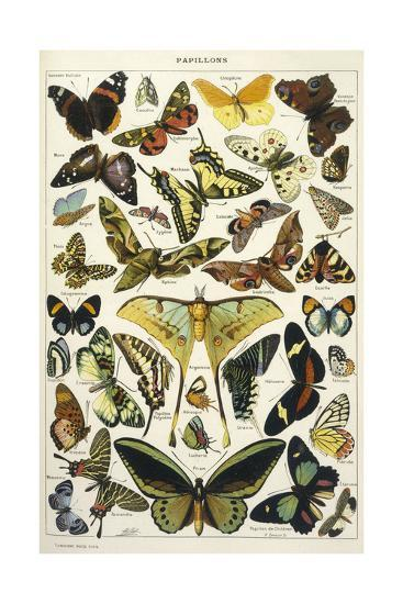 Butterflies in Larousse--Giclee Print