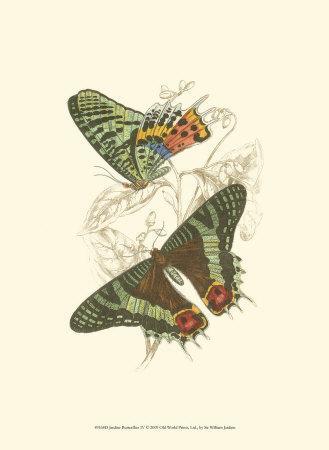https://imgc.artprintimages.com/img/print/butterflies-iv_u-l-f31u890.jpg?p=0