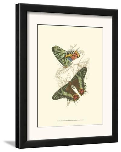 Butterflies IV-Sir William Jardine-Framed Art Print