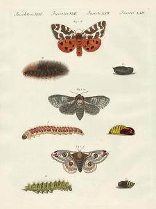 Butterflies -- Night Butterflies