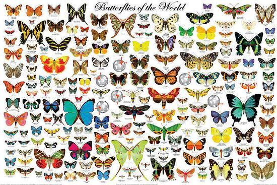 Butterflies of the World--Poster