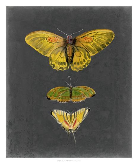 Butterflies on Slate I-Naomi McCavitt-Giclee Print