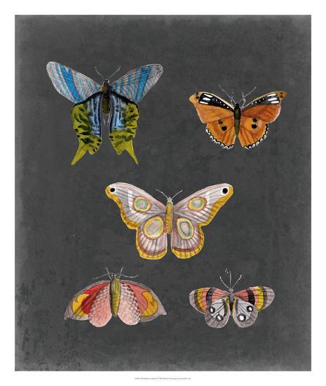 Butterflies on Slate II-Naomi McCavitt-Giclee Print