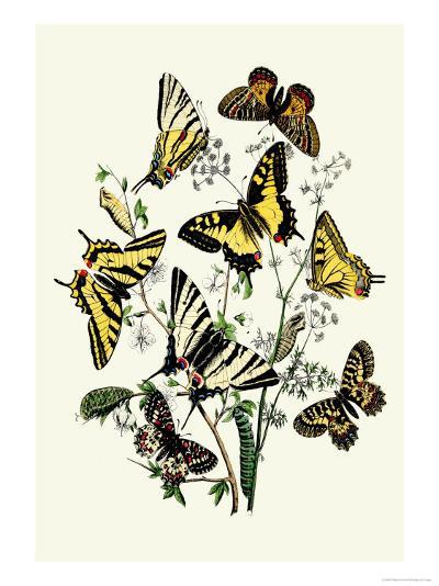 Butterflies: P. Podaliris, P. Alexanor-William Forsell Kirby-Art Print