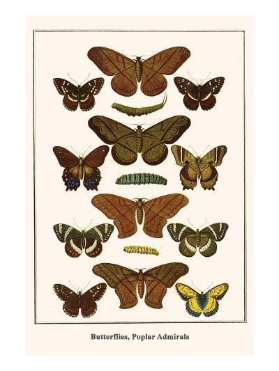 Butterflies, Poplar Admirals-Albertus Seba-Art Print