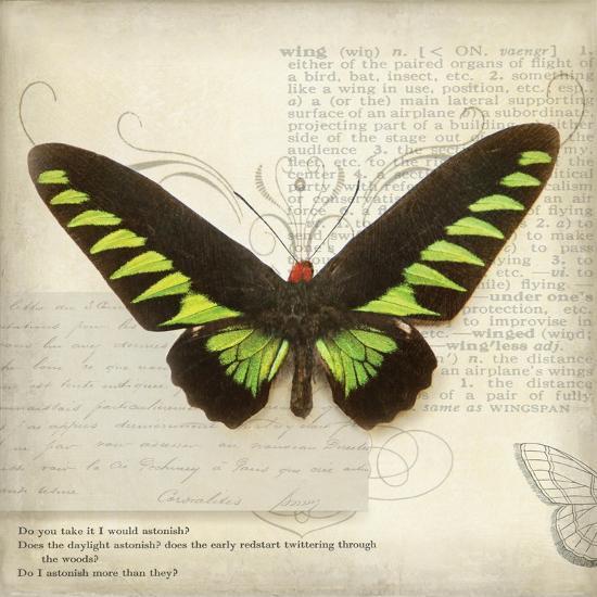 Butterflies Script VI-Amy Melious-Art Print