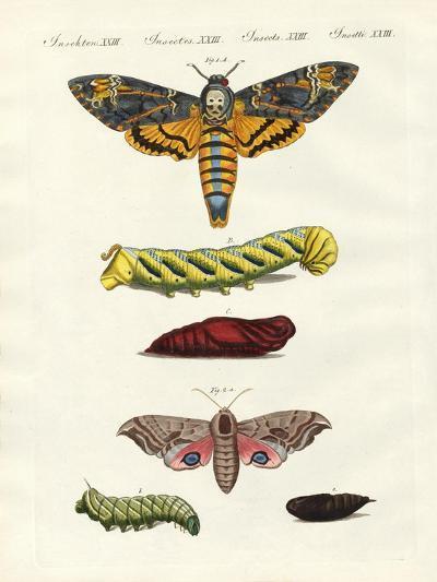 Butterflies -- Twilight Butterflies--Giclee Print
