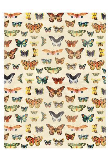 Butterflies-Jace Grey-Art Print