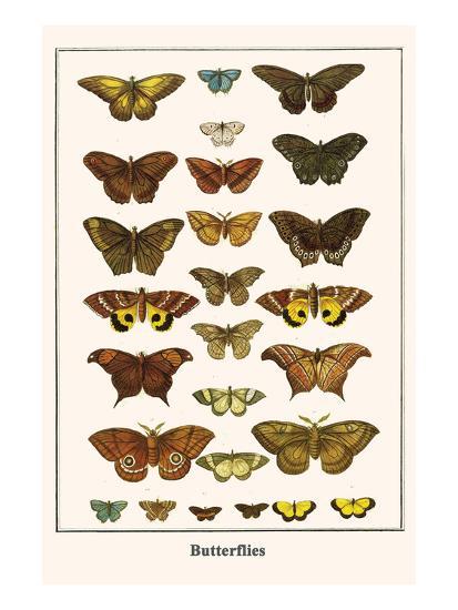 Butterflies-Albertus Seba-Art Print