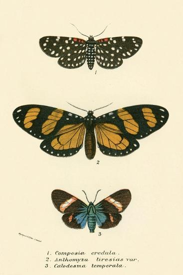 Butterflies-English School-Giclee Print