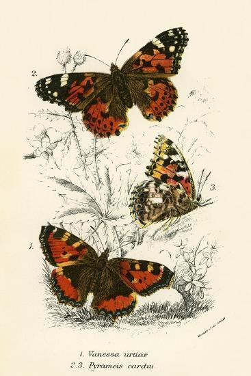 Butterflies-English School-Giclee Print
