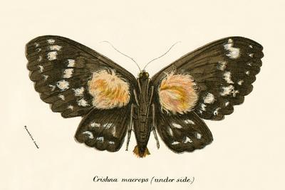 https://imgc.artprintimages.com/img/print/butterflies_u-l-pjnjlj0.jpg?p=0
