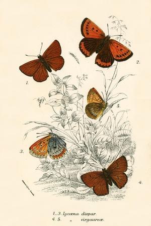 https://imgc.artprintimages.com/img/print/butterflies_u-l-pjnrvj0.jpg?p=0