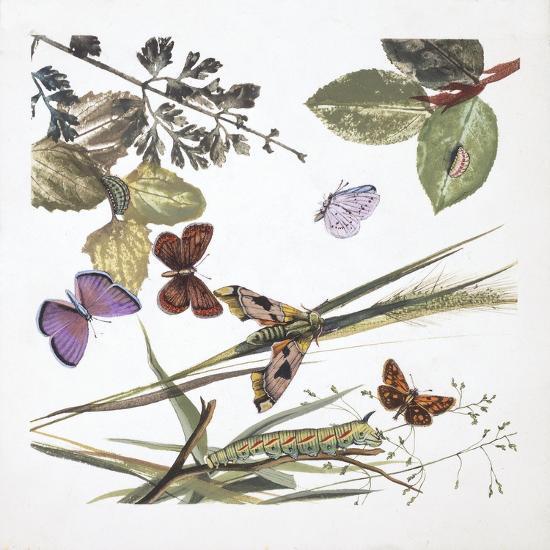 Butterflies--Giclee Print