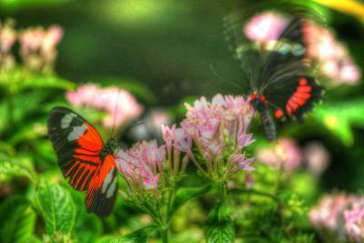 Butterfly 11-Robert Goldwitz-Photographic Print