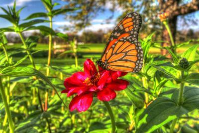 https://imgc.artprintimages.com/img/print/butterfly-15_u-l-q10pmun0.jpg?p=0