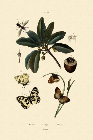 Butterfly, 1833-39--Giclee Print